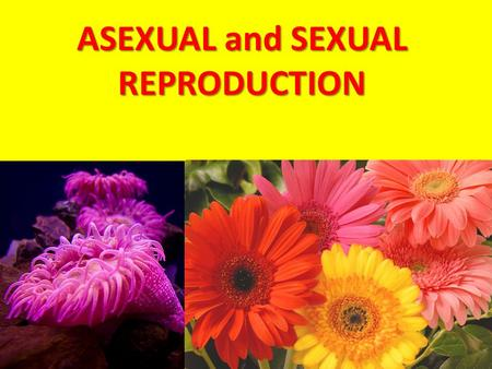 ASEXUAL and SEXUAL REPRODUCTION. Reproduction is the process of making offspring from one or two parents.