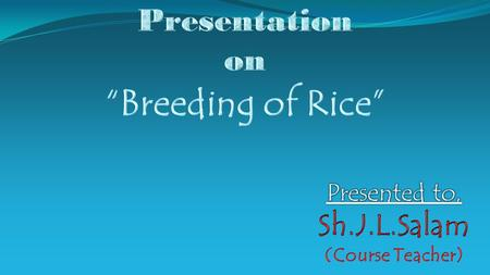 RICE Rice – Oryza sativa World's No. 1 food cereal. Nutritious. Sacred grain in many regions. Valuable commodity.