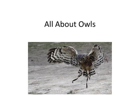 All About Owls. What is an owl? Owls are RAPTORS which means they are birds of prey. They have sharp talons (claws) and beaks to catch their prey. Most.