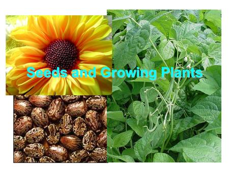 Seeds and Growing Plants. Parts of a plant Function of plant parts.