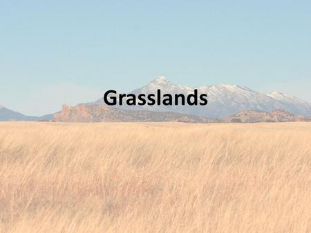 Grasslands. Locations Climate Cool in winter, hot in summer; 30-50 inches of precipitation a year In South America, the climate there is humid and moist.