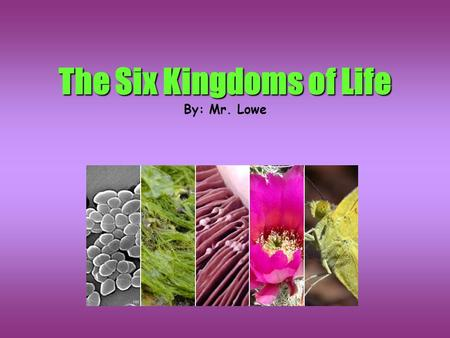 The Six Kingdoms of Life By: Mr. Lowe