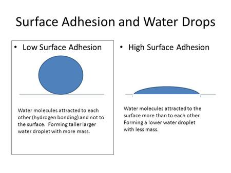 Surface Adhesion and Water Drops Low Surface Adhesion High Surface Adhesion Water molecules attracted to each other (hydrogen bonding) and not to the surface.