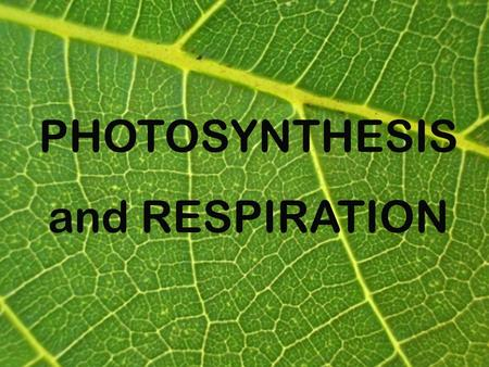 PHOTOSYNTHESIS and RESPIRATION. Photosynthesis: STORING energy from the sun in molecules of glucosePhotosynthesis: STORING energy from the sun in molecules.