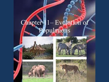 Chapter 11– Evolution of Populations. Darwin knew traits had to be heritable, but didn't know how heredity worked  scientists started to connect Darwin.