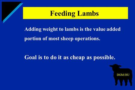 Adding weight to lambs is the value added portion of most sheep operations. Goal is to do it as cheap as possible. Feeding Lambs DGM:ISU.