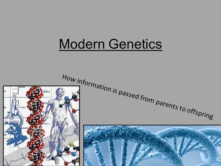 Modern Genetics How information is passed from parents to offspring.