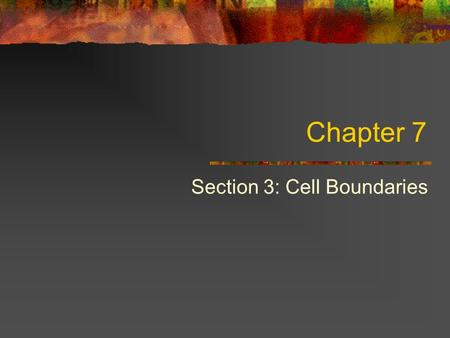 Chapter 7 Section 3: Cell Boundaries. Cell Membrane Regulates what enters and leaves the cell. Provides protection and support.