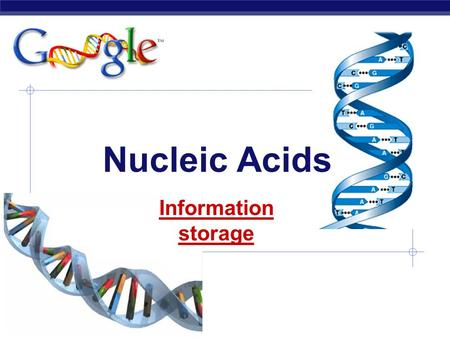 AP Biology Nucleic Acids Information storage proteins DNA Nucleic Acids  Function:  genetic material  stores information  genes  blueprint for building.