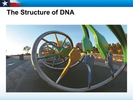 The Structure of DNA. Learning Objectives  Identify the chemical components of DNA.  Describe how scientists solved the structure of DNA.  Explain.