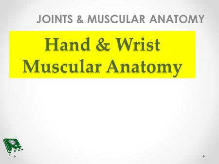 Hand & Wrist Muscular Anatomy JOINTS & MUSCULAR ANATOMY.