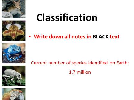 Classification Current number of species identified on Earth: 1.7 million Write down all notes in BLACK text.