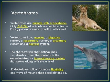 Vertebrates are animals with a backbone. Only 5-10% of animals are vertebrates on Earth, yet we are most familiar with them! Vertebrates have muscles,