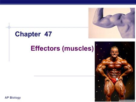 AP Biology 2005-2006 Effectors (muscles) Chapter 47.