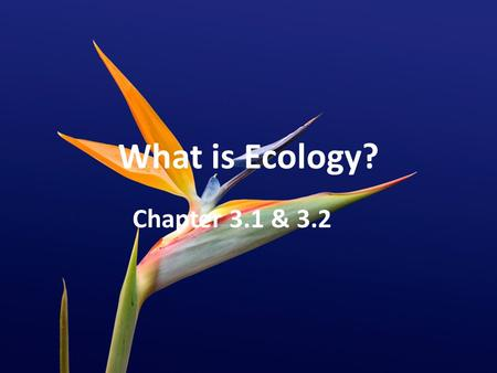 What is Ecology? Chapter 3.1 & 3.2. Ecology Study of INTERACTIONS among: – Organisms – Organisms and their surroundings.