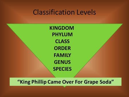 "Classification Levels KINGDOM PHYLUM CLASS ORDER FAMILY GENUS SPECIES ""King Phillip Came Over For Grape Soda"""