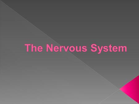 Central N.S. (brain and spinal cord ) Nervous system Autonomic N.S. (controls self-regulated action of internal organs and glands like The heart and lungs)