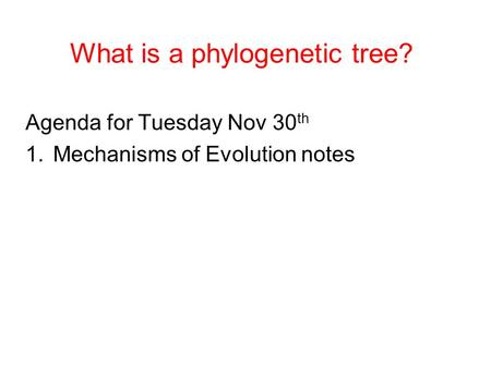 What is a phylogenetic tree? Agenda for Tuesday Nov 30 th 1.Mechanisms of Evolution notes.