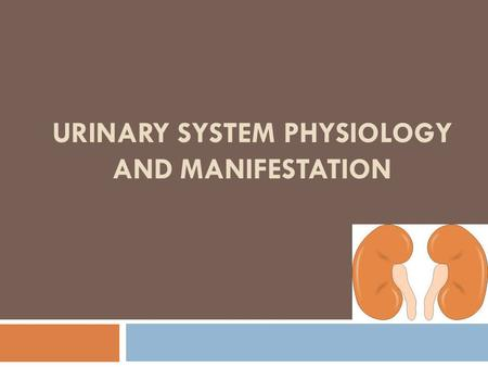 URINARY SYSTEM PHYSIOLOGY AND MANIFESTATION. Functions of the Urinary System  Elimination of waste products: Nitrogenous wastes Toxins Drugs  Regulate.