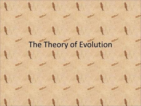 The Theory of Evolution. 2 views of evolution Microevolution – Small changes over SHORT periods of time – Supports improvements in existing species Macroevolution.