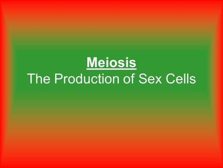Meiosis The Production of Sex Cells. How many chromosomes does a human body cell have? 46.
