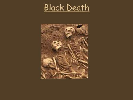 Black Death Cures In the 14 th century no-one knew what the caused the Black Death.