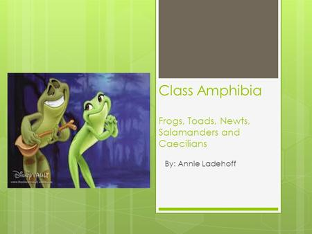 Class Amphibia Frogs, Toads, Newts, Salamanders and Caecilians By: Annie Ladehoff.