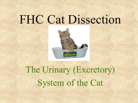 FHC Cat Dissection The Urinary (Excretory) System of the Cat.