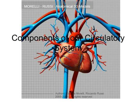 Components of our Circulatory System. What we will be looking at: Why do multi-cellular organisms need and internal transport system? List the functions.