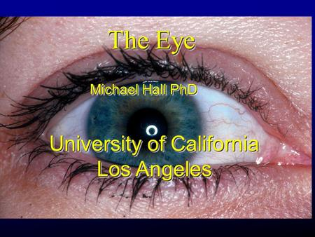The Eye Michael Hall PhD University of California Los Angeles University of California Los Angeles.