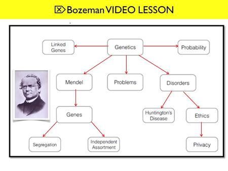 Bozeman VIDEO LESSON.  INTRODUCTION- [0:00-2:04] 1-IDENTIFY: What did Mendel work with? -pea plants 2-EXPLAIN why pea plants are good organisms for.
