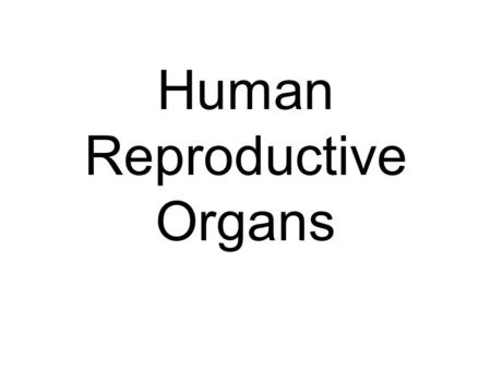 Human Reproductive Organs. Male external anatomy.