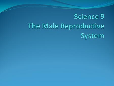 The Male Reproductive System The male reproductive system has two main purposes: To produce sperm To deliver the sperm to the egg.