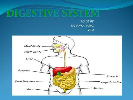 MADE BY- PRIYANKA YADAV VII-A DIGESTIVE SYSTEM H uman digestive system, the system used in the human body for the process of digestion. The human digestive.