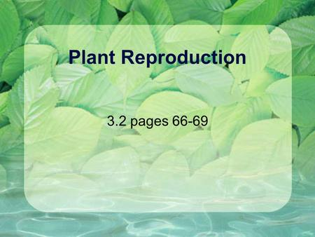 Plant Reproduction 3.2 pages 66-69. Plant Parts: Male Pollen: Anther: Filament: Carries the plant sperm Where the pollen is made The stem of the anther.