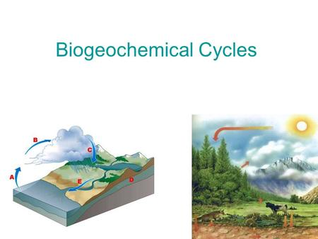 Biogeochemical Cycles. Transpiration is the release of water from plants. precipitation condensation transpiration evaporation water storage in ocean.