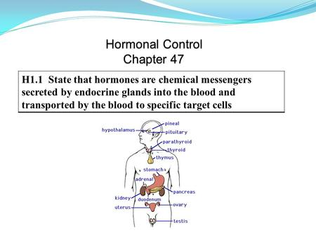 H1.1 State that hormones are chemical messengers secreted by endocrine glands into the blood and transported by the blood to specific target cells.