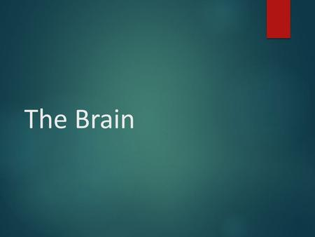 The Brain. Lower-Level Brain Structures: The Brainstem.