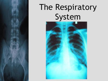 The Respiratory System. Blood transports oxygen from the lungs to cells and carries carbon dioxide from the cells to the lungs. It is the function of.