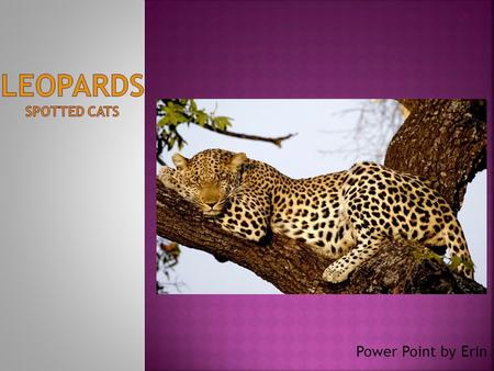 Power Point by Erin.  THE NAME OF MY ANIMAL IS a LEOPARD  THE SCINENTIFIC NAME FOR a LEOPARD IS PANTHERA PARDUS  LEOPARDS ARE MAMMALS  LEOPARDS ARE.