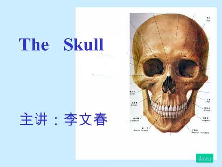 The Skull 主讲:李文春 down. The skull The skull contains 23 bones.The skull is is divided into two parts :cerebral cranium and facial cranium down Up.