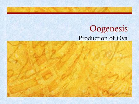 Oogenesis Production of Ova.