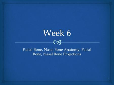 Facial Bone, Nasal Bone Anatomy, Facial Bone, Nasal Bone Projections
