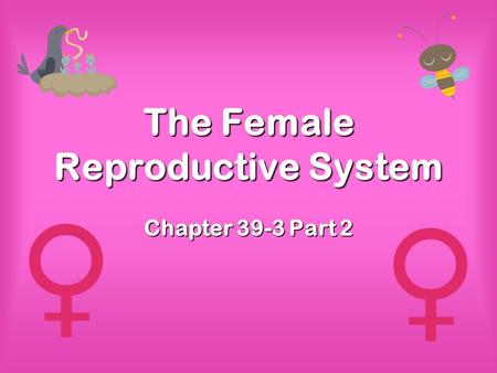 The Female Reproductive System Chapter 39-3 Part 2.