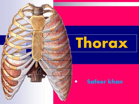 Regional anatomy of thorax Boundaries Superior - jugular notch, sternoclavicular joint, superior border of clavicle, acromion, spinous processes of C7.