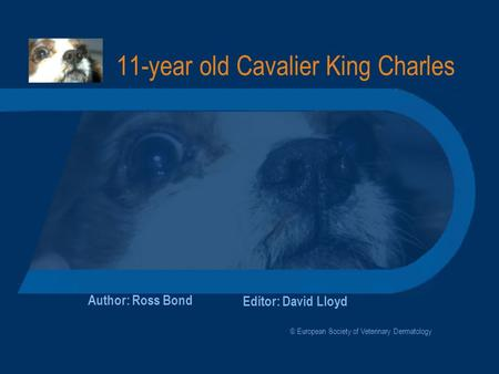 11-year old Cavalier King Charles Author: Ross Bond Editor: David Lloyd © European Society of Veterinary Dermatology.