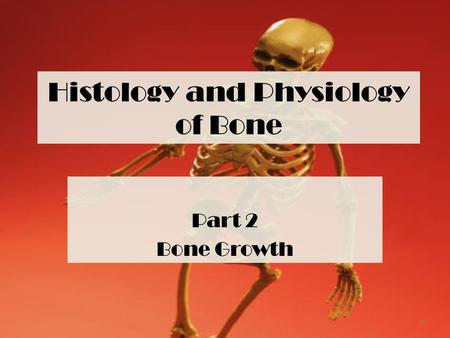 Histology and Physiology of Bone Part 2 Bone Growth 1.