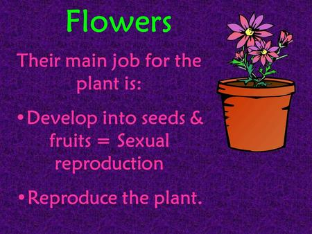 Flowers Their main job for the plant is: Develop into seeds & fruits = Sexual reproduction Reproduce the plant.