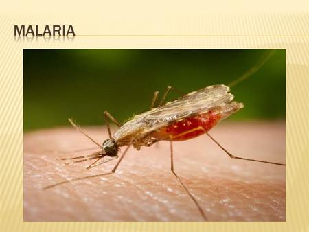  Begins with a mosquito bite by the infected insect  Malaria symptoms appear about 9 to 14 days after the infectious mosquito bite  Typically, malaria.