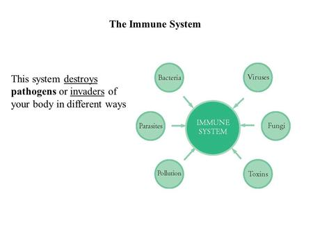 The Immune System This system destroys pathogens or invaders of your body in different ways.